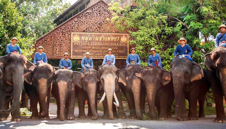 Derevnya slonov v Pattaje