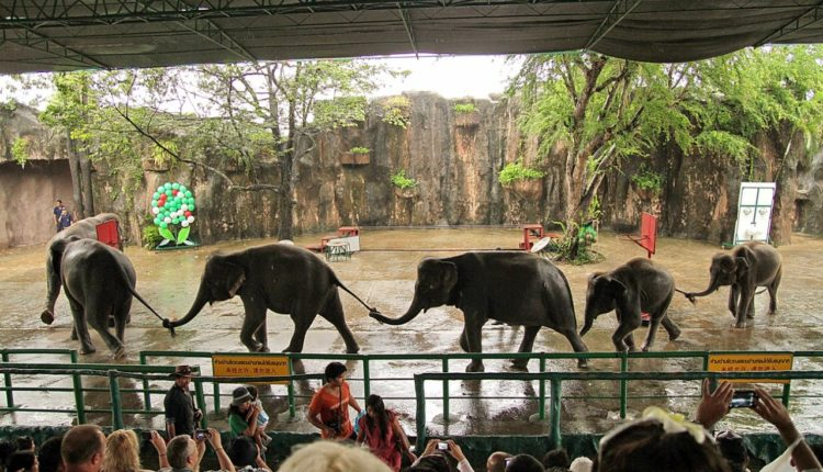 zoologicheskij sad Khao v Bangkoke