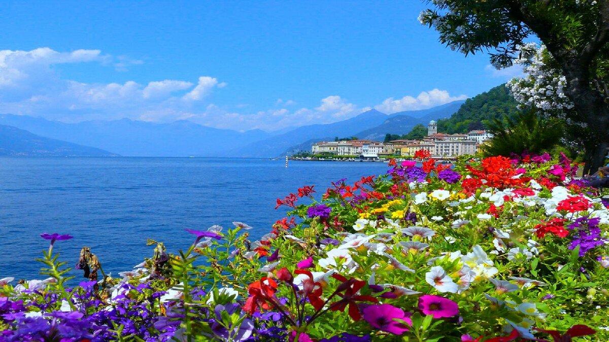 фото лето море и цветы картой картоприемником все