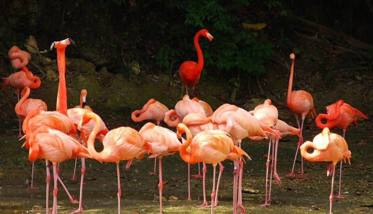 zoopark Manati
